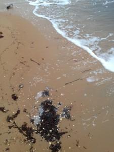 Naturens eget skräp, i form av ilandfluten tångruska.